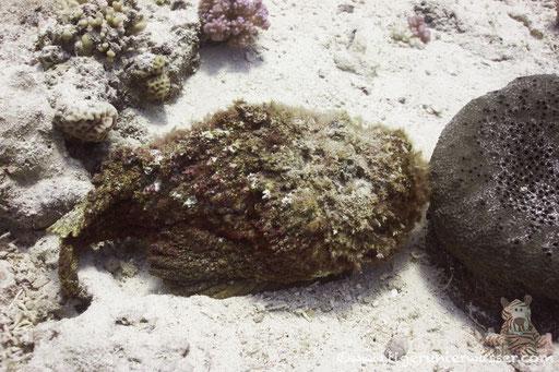 Umm Kamar - Hurghada  - Red Sea / Aquarius Diving Club