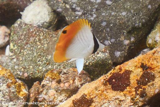 ??? / Marriott Beach - Hurghada - Red Sea / Aquarius Diving Club