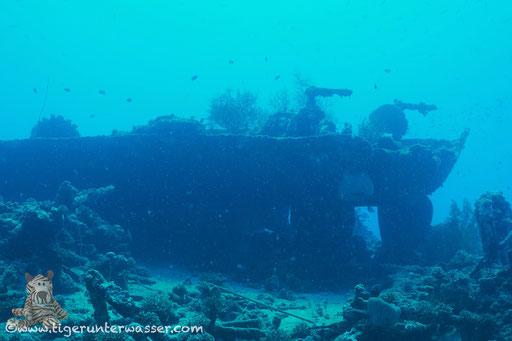 ??? / Shabrul - Hurghada -  Red Sea / Aquarius Diving Club