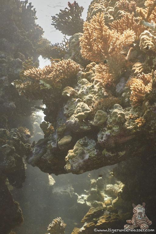 Shabrul / Hurghada - Red Sed / Aquarius Diving Club