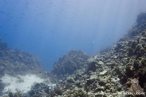 Erg Somaya / Hurghada - Red Sea / Aquariur Diving Club