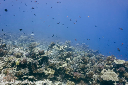 Carless Reef / Hurghada - Red Sea / Aquarius Diving Club
