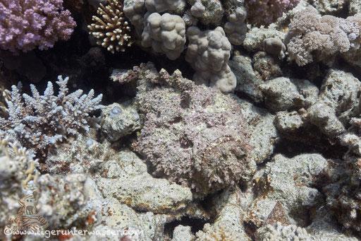 Small Giftun - Hurghada - Red Sea / Aquarius Diving Club