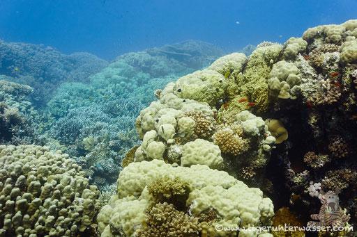 Shaab Sabina / Hurghada - Red Sea / Aquarius Diving Club