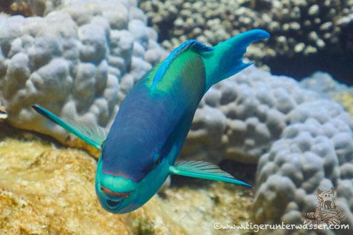 Godda Abu Ramada East - Hurghada - Red Sea / Aquarius Diving Club