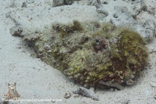 Hurghada - Red Sea / Aquarius Diving Club