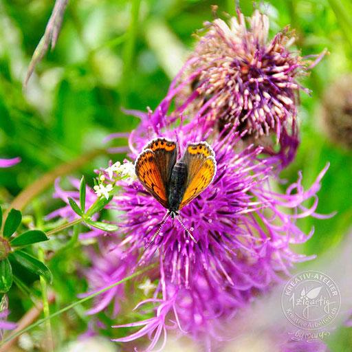Schmetterling - ist es ein grosser Fuchs? - geknipst auf meiner Wanderung, © www.kreativearbeiten.ch