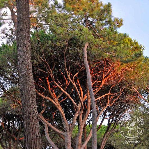 Abendrot in den Bäumen in der Toscana, © www.kreativearbeiten.ch
