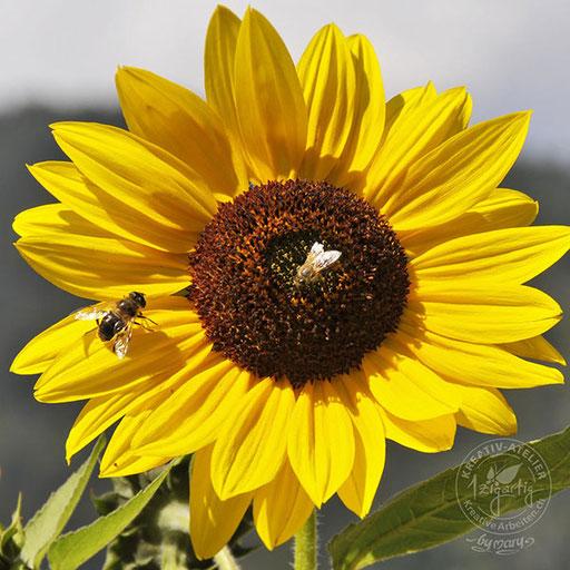 Gelbe Sonnenblume mit fleissigen Bienchen, © www.kreativearbeiten.ch