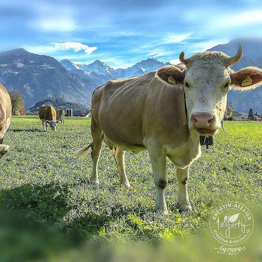Glückliche Kühe auf der Weide in Unterseen - mit Hörnern!, © www.kreativearbeiten.ch
