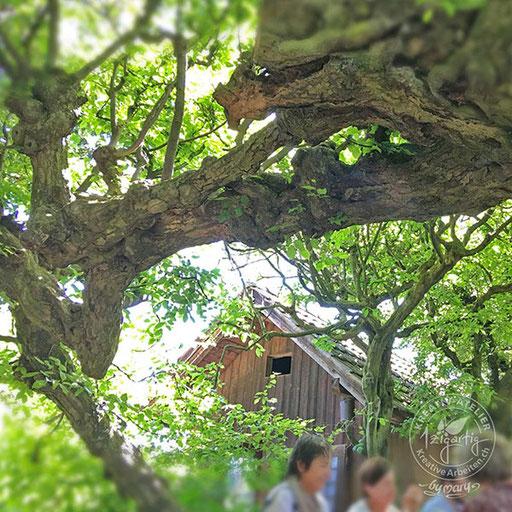 Magischer uralter Baum mit Sitzplatz in Solothurn, © www.kreativearbeiten.ch