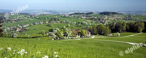 Birnbaumblüte im Mostviertel, Niederösterreich. Panoramafoto © Ofner