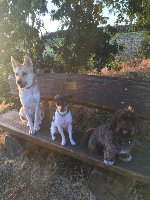 21.08.2018 - Carlie und seine Freunde
