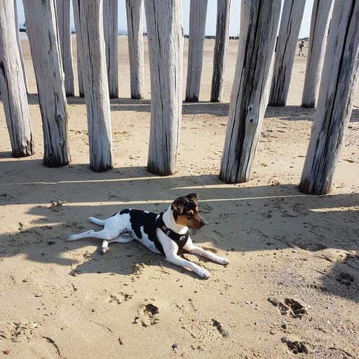21.04.2018 - Cooper an der Nordsee