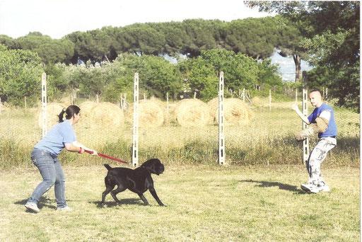 in addestramento presso il CENTRO DI PSICOLOGIA CANINA di Roma