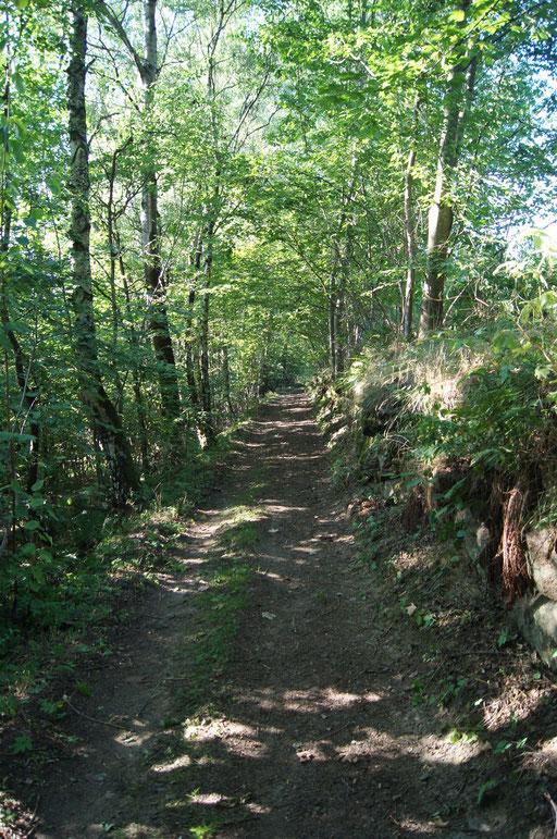 Wanderwege rund um Elisabethszell