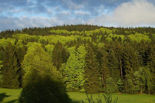 Ein Wald zum erholen