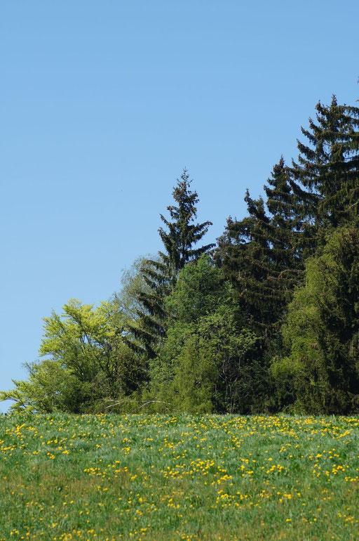 Ausblick auf unsere grüne Idylle