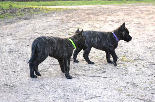 Laska en Lasko