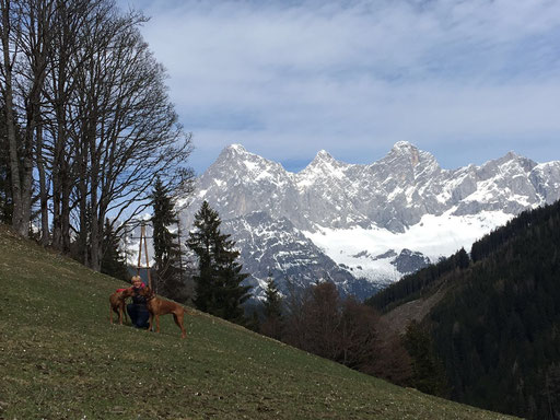 ...vor dem Dachstein-Massiv