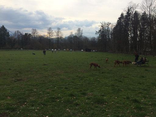 Hundewiese in Salzburg