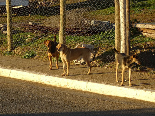Die 'Gang' wartet auf Jaqueline ;o)