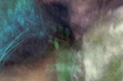 Organismes, photographie, tirage Fine art sur Arches museum 315g, 50x75cm, 10 ex.