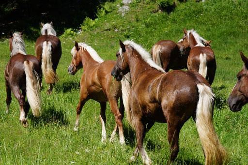 Insgesamt elf Schwarzwälder verbringen die Sommermonate in den Bergen