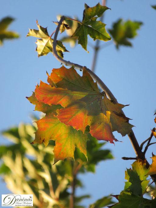Inspiriert von den Farben der Natur: rot gefärbte Herbstblätter