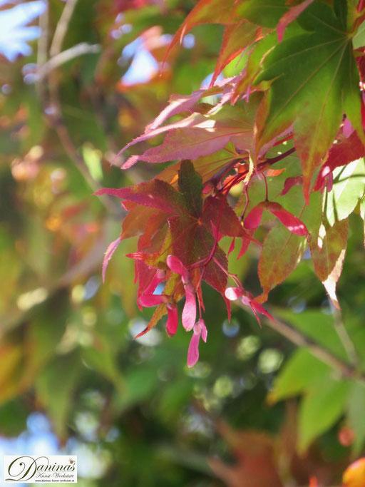Inspiriert von den Farben der Natur: rote Ahornsamen