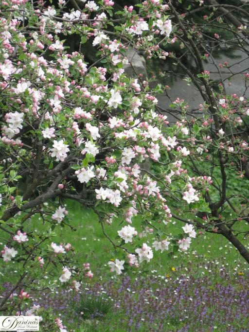 Im naturnahen Garten blüht es alle 4 Jahreszeiten, wie im Frühling die nektarreichen Obstbäume