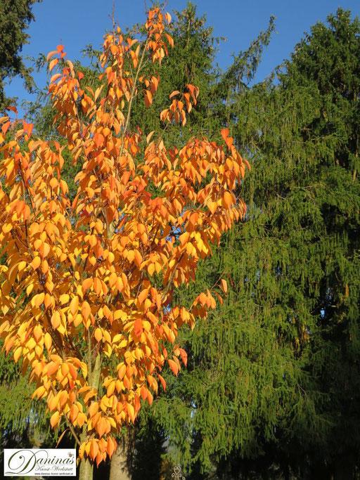 Inspiriert von den Farben des Herbstes: orange gefärbten Herbstblätter