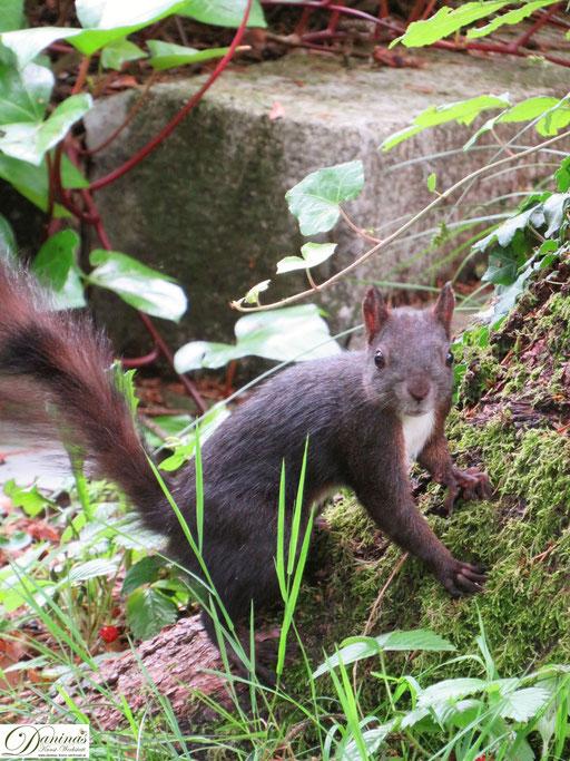 Bezauberndes Eichhörnchen im Garten