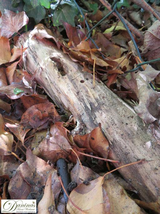 Insekten schützen: Naturnahen Garten gestalten mit Totholz, das als Behausung dient.