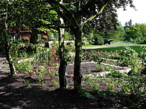 Obwohl die Pflanzen noch nicht einmal angewachsen sind hat der Garten einen neuen Charakter