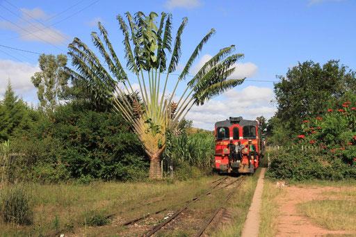 Jungleexpress