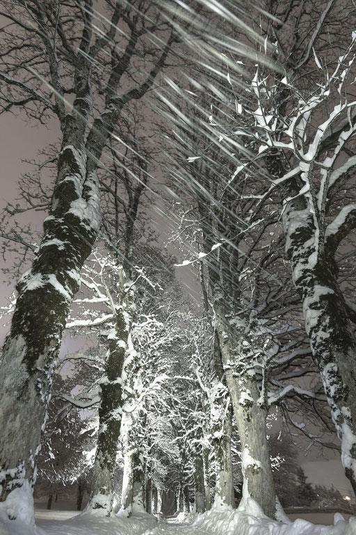 Grusel-Pfad im Oberallgäu, Oberstdorf.  Aufnahme aus 8 Bildern zusammengesetzt © martinsieringphotography
