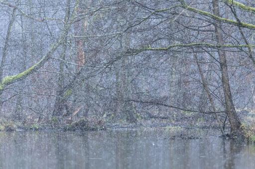 Ein Hauch von Winter im UNESCO Biosphärenreservat Spreewald © martinsieringphotography