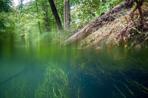 Spreewaldfließ im Biosphärenreservat © martinsieringphotography