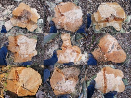 Exempel Baumstümpfe