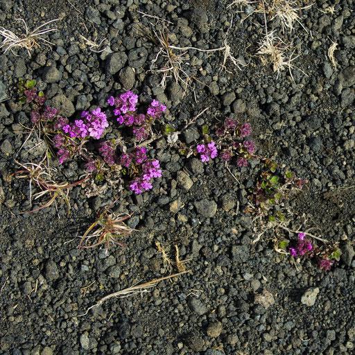 Aridité fleurie