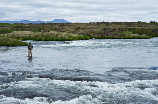 Pêcheur sur la rivière Laxa. Sa tête est recouverte d'un filet pour se protéger des moucherons qui envahissent la région du lac. Inoffensifs mais très agaçants, ils donnent leur nom au lac. My = moucheron et vatn = lac.