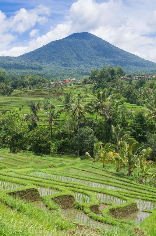 Jatiluwih et Mont Agung