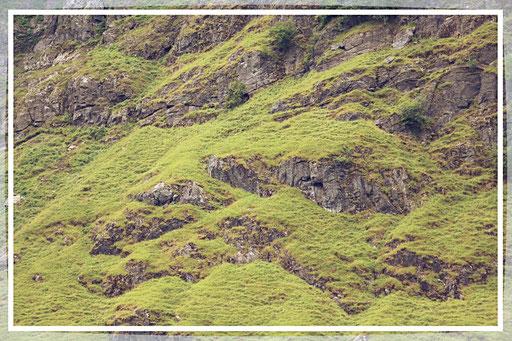 Berge, so grün