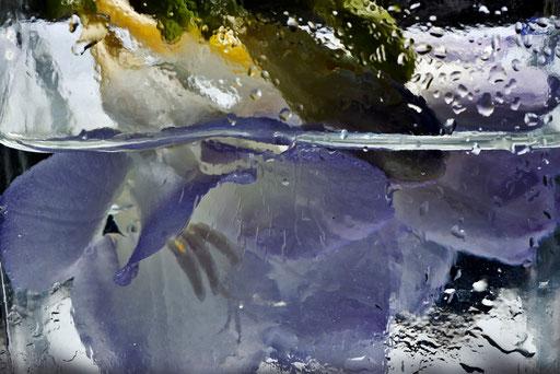 Freesia, © Annick Maroussy