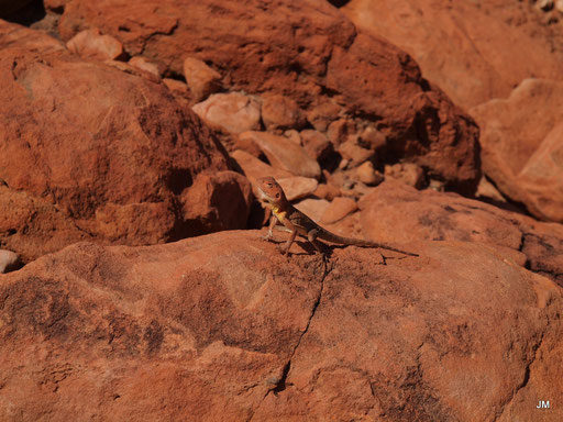 Leben im  Outback Teil 1
