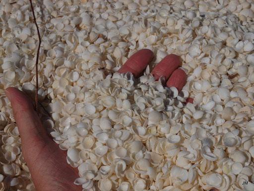 Shell Beach Conservation Park