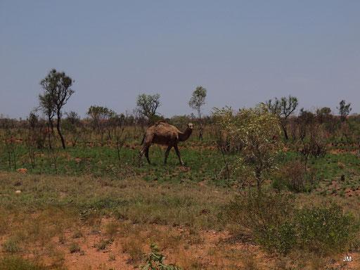 Leben im  Outback Teil 2