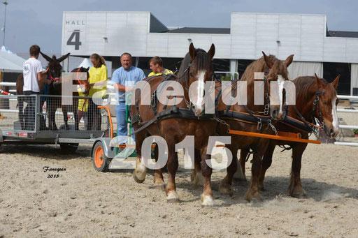 Salon Equitaine de Bordeaux 2015 - Démonstration d'attelage à 3 chevaux de front -