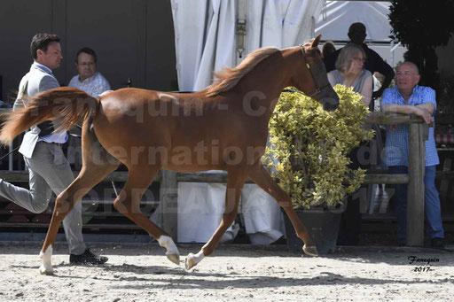 """Concours international de chevaux ARABES - """"Arabian Masters"""" Bordeaux 2017 - 4"""